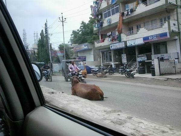 kondisi lalu lintas india