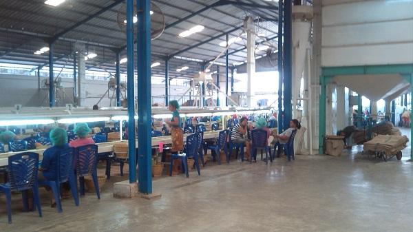 kunjungan ke alamat pabrik kopi di medan (1)